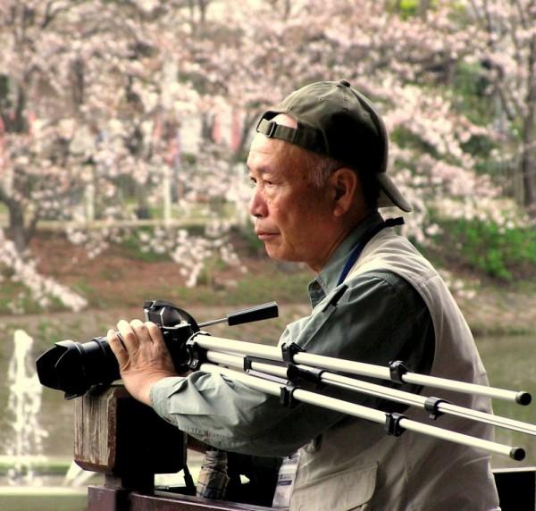 photographer shukugawa blossom sakura Japan