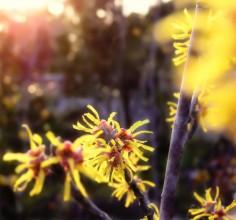 Spring Flowers Himeji Castle Japan