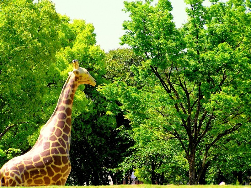park japan giraffe amagasaki tree