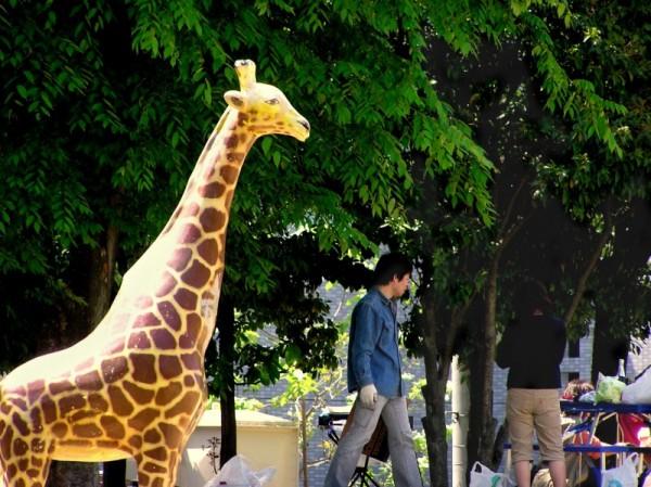 amagasaki giraffe park japan