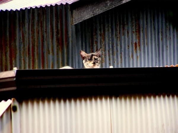 cat roof Ikoma Osaka Japan