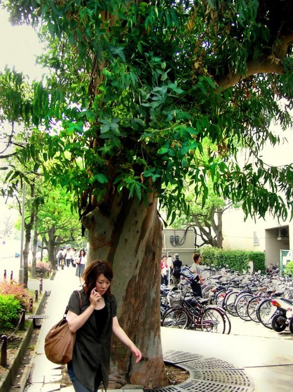 Non Japanese Trees Are Around