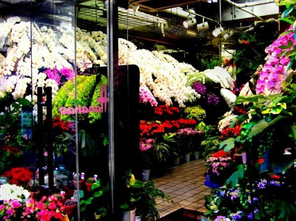 flower shop Kitashinchi Osaka Japan florist