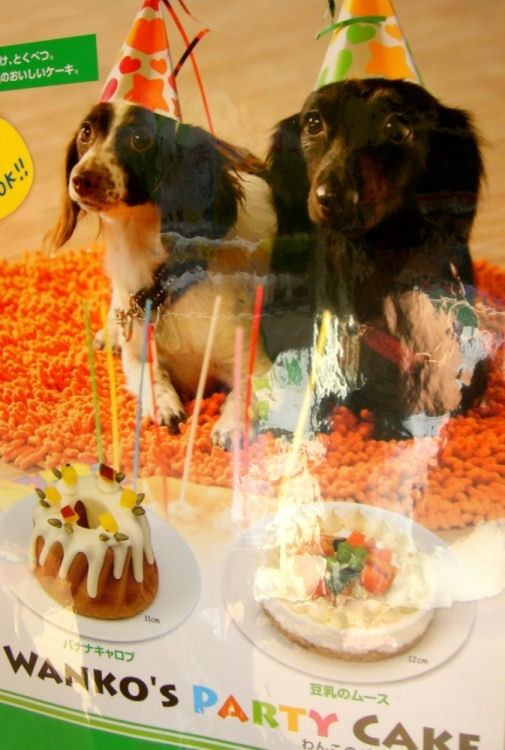 wanko party cake