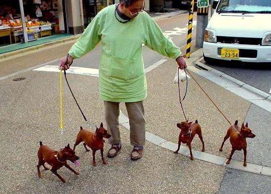 street dog Kanazawa Japan