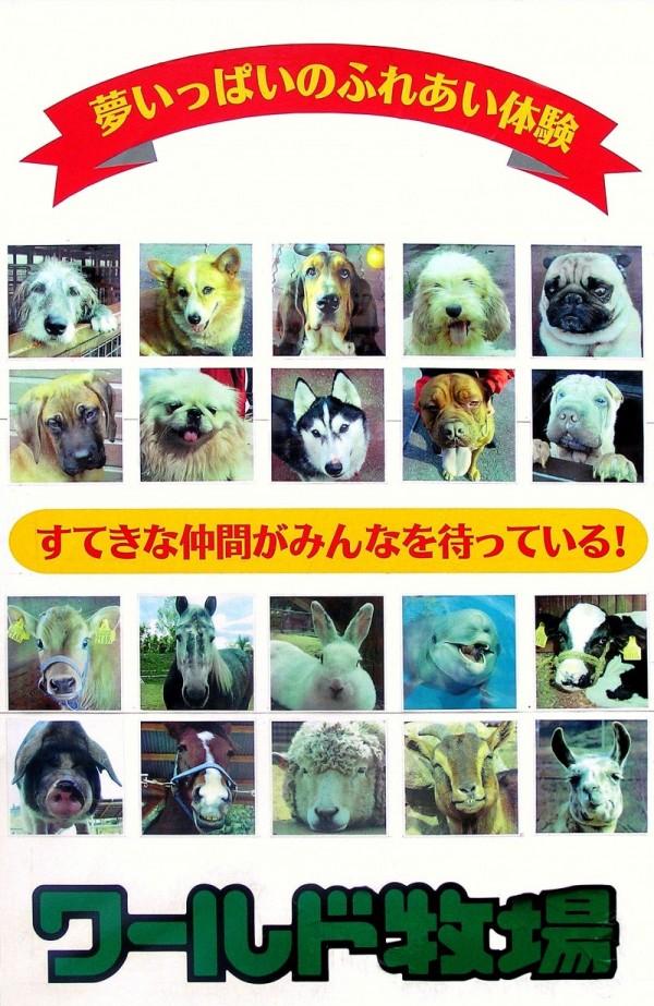 dog park tondabayashi world-bokujo osaka japan