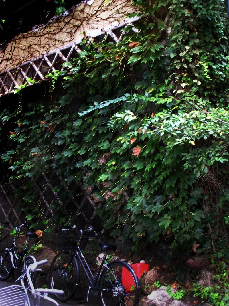 Okayama old house greenery