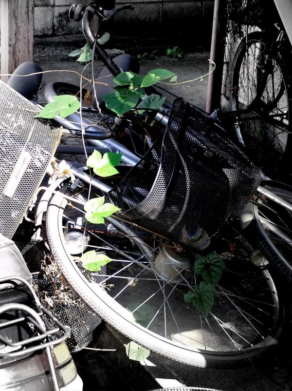 bicycle konakajima sonoda amagasaki japan vine