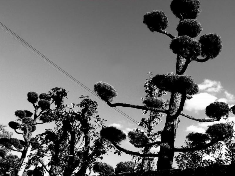 trees Amagasaki garden japan power-lines