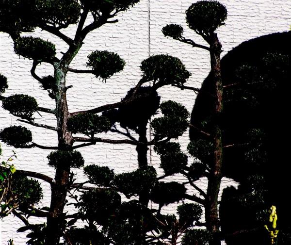 Garden, Amagasaki trees