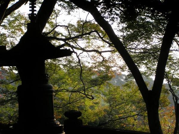 Kiyomizu-dera Japan Kyoto view tree.