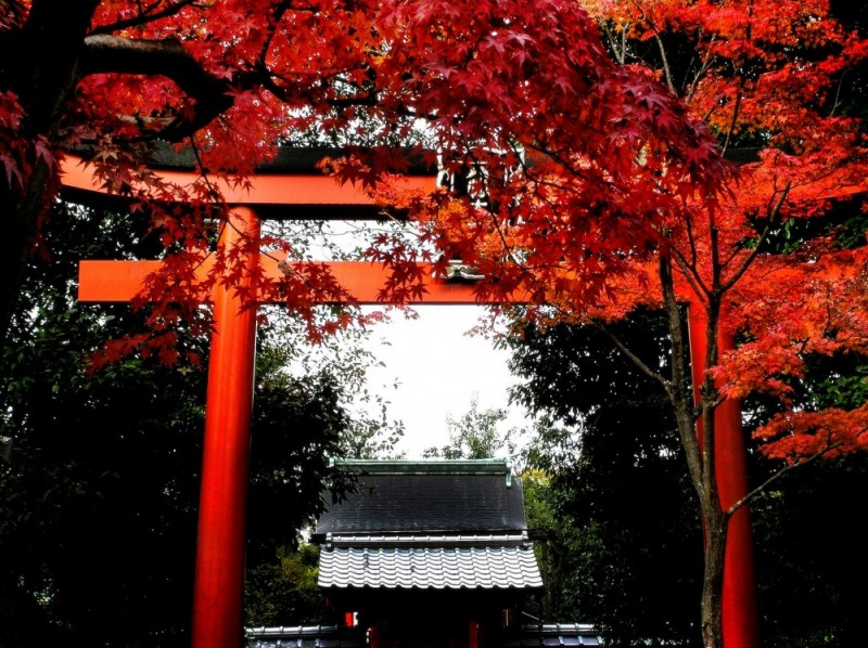 leaf kyoto temple arashiyama tenryu-ji