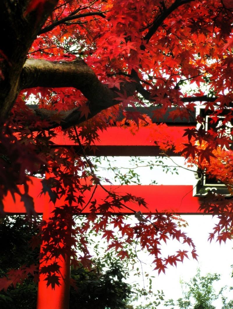 autumn leaf kyoto temple arashiyama tenryu-ji