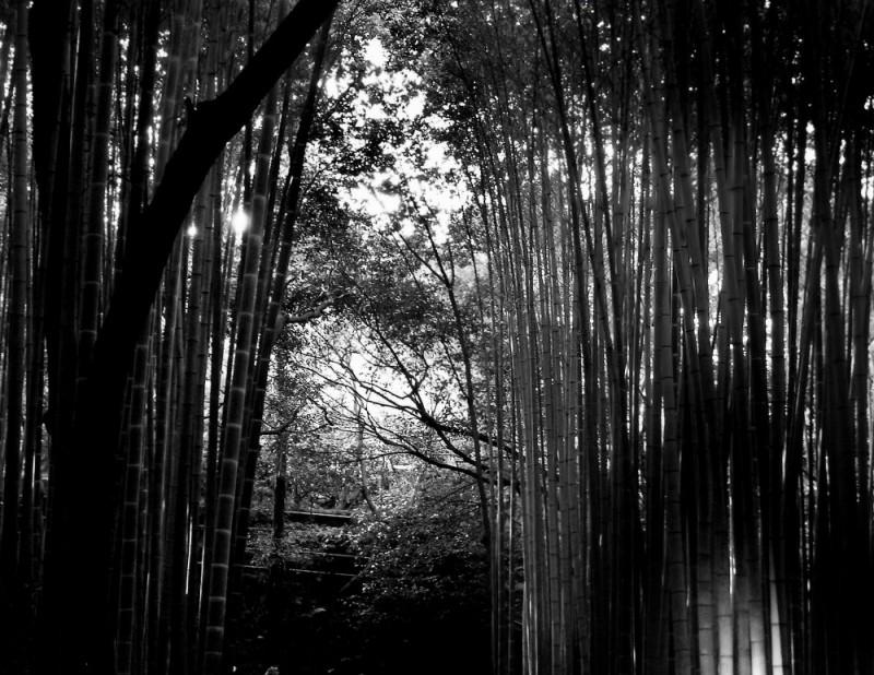 Bamboo Forest, Arashiyama Kyoto