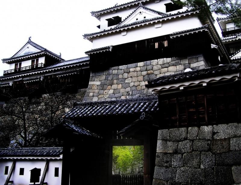 Black Bamboo, Matsuyama Castle Japan