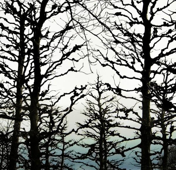 Shinjuku Park Tokyo tree branch japan