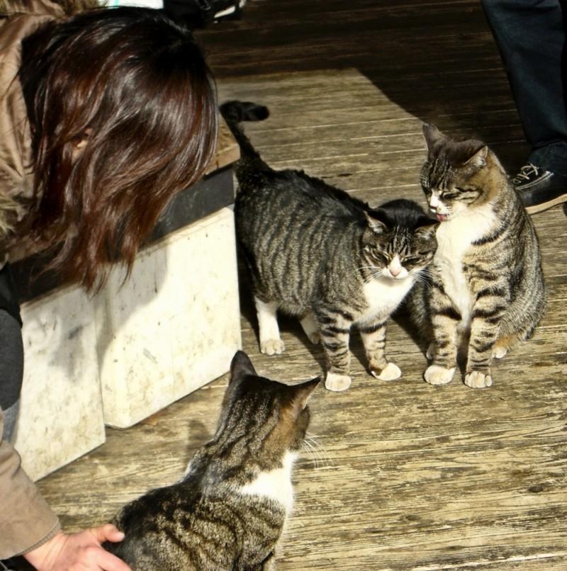 cat Shinjuku park Tokyo
