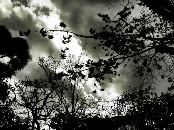 silhouette branch cloud sakura blossom japan
