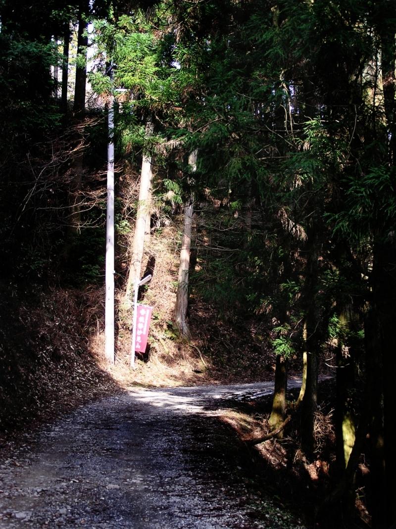 japan hyogo myoken kawanishi tree forest hill path