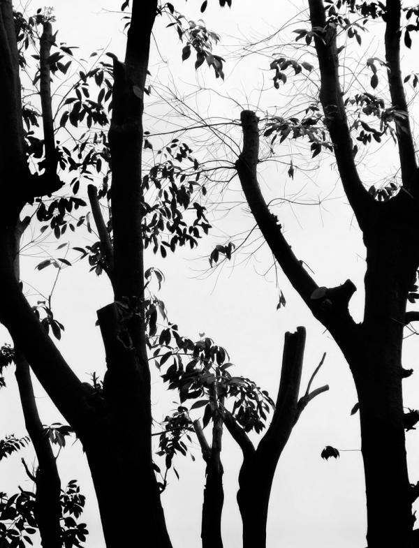 Pruned Trees, Uegahara