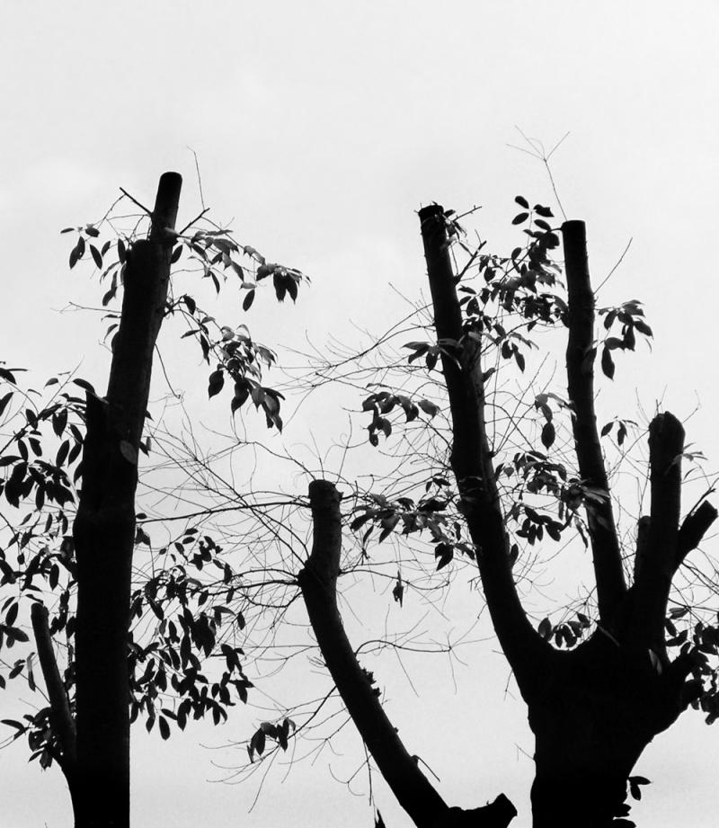tree nishinomiya uegahara hyogo japan