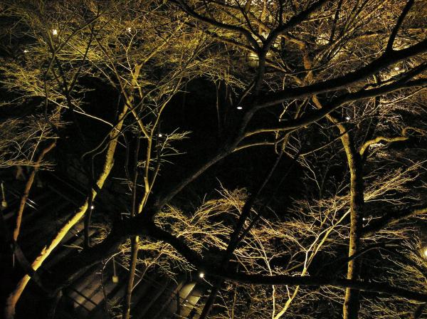 Kiyomizu Nights 4