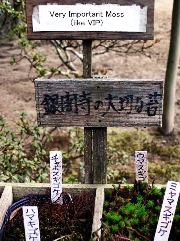 kyoto ginkakuji garden important moss