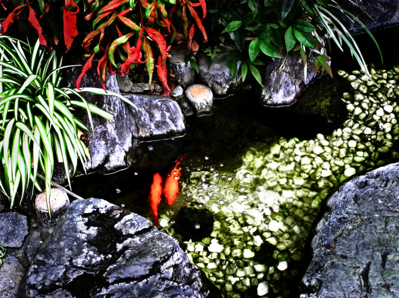 Kyoto streets goldfish Japan pond