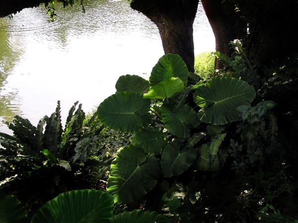Okinawa Naha greenery Japan