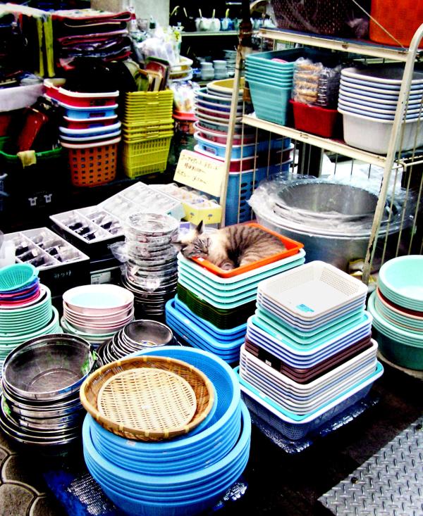 market Naha Okinawa cat Japan Heiwadori
