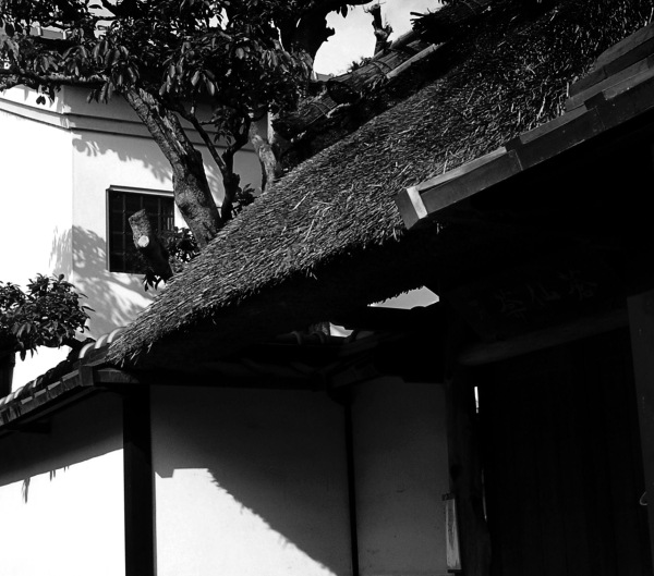 Arashiyama Kyoto house thatch roof doorway Japan