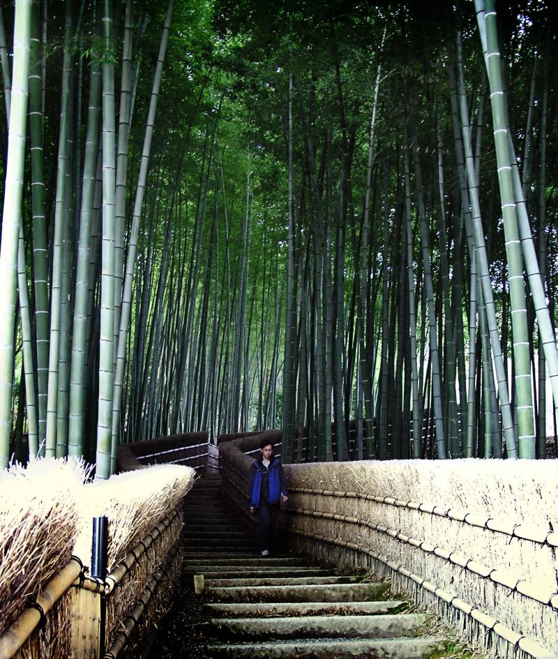 Adashino Nenbutsu-ji Arashiyama Kyoto bamboo Japan