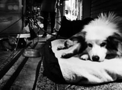 cat dog night Shinsaibashi Osaka street japan