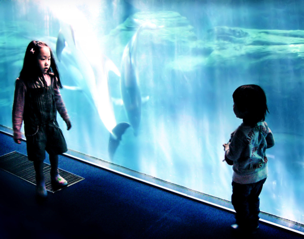 children Osaka aquarium Japan kaiyukan
