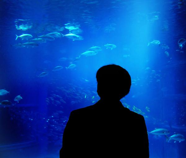 Osaka aquarium tourist Japan
