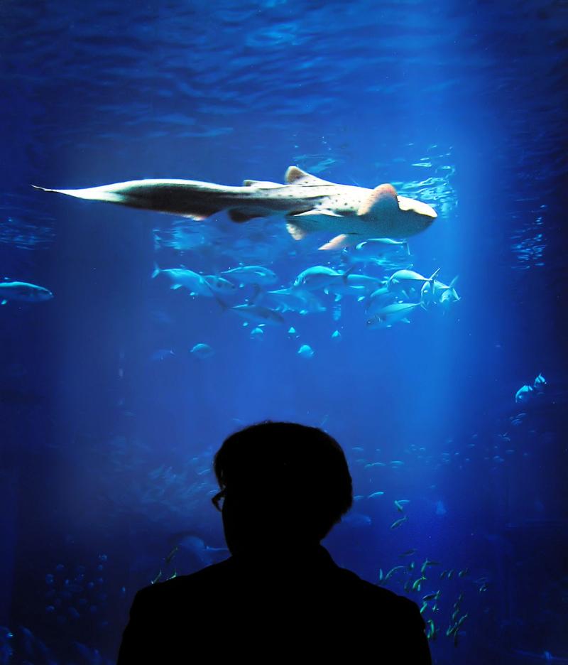 Osaka aquarium tourist Japan shark