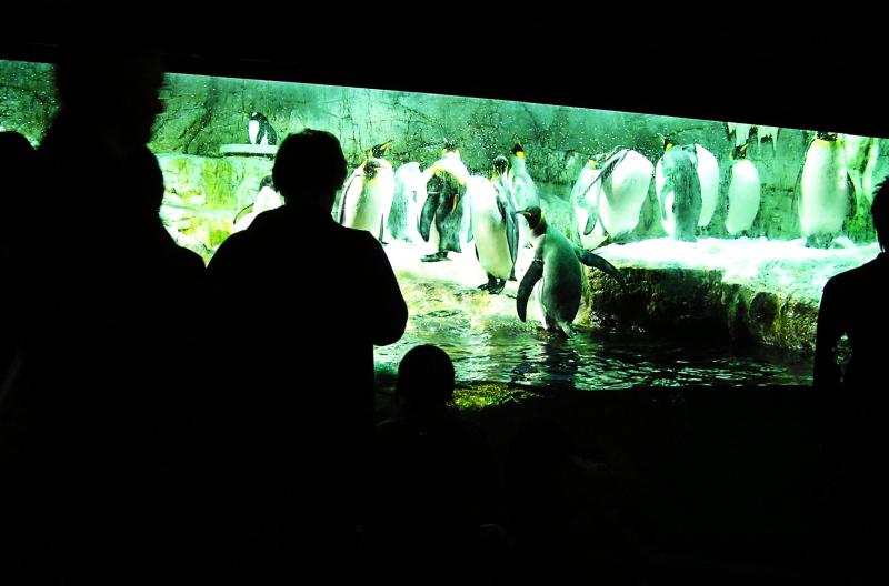 Osaka aquarium tourist penguins Japan