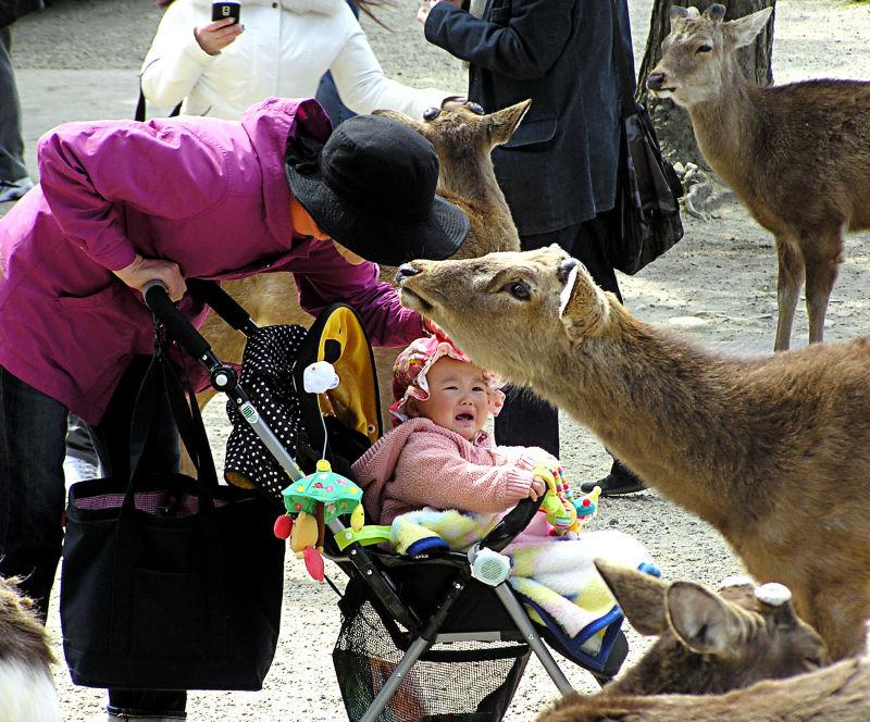 deer Nara Todaiji baby Japan tourist