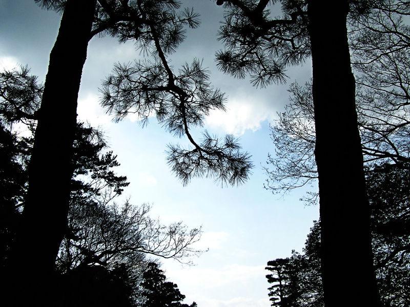 Nara garden Japan tree sky