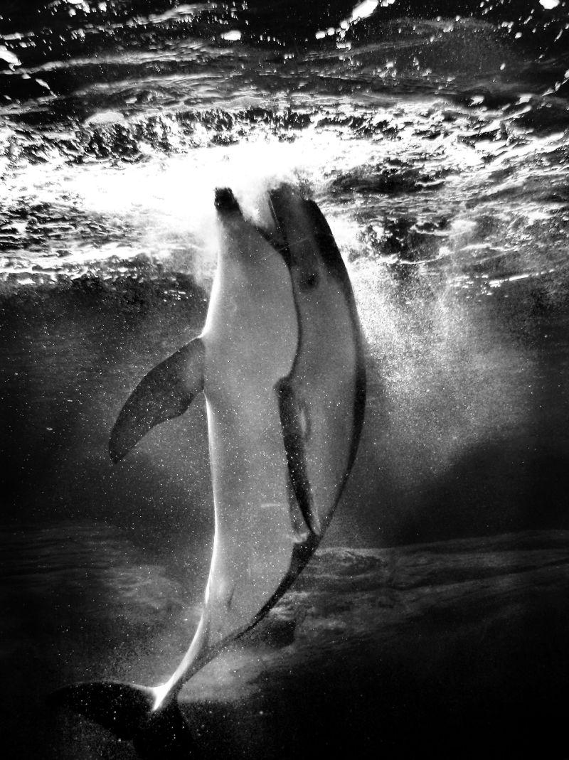 dolphin Osaka aquarium kaiyukan Japan