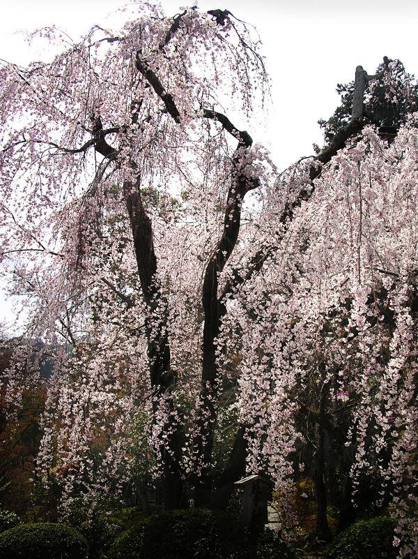 Tenryu ji Garden, Arashiyama 3