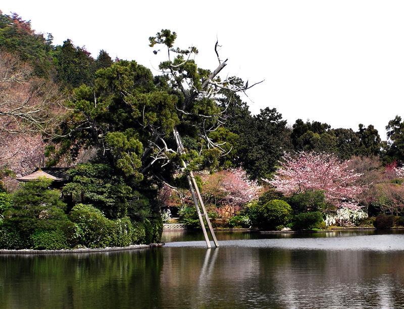 Ryoan-ji garden temple lake tree Kyoto Japan