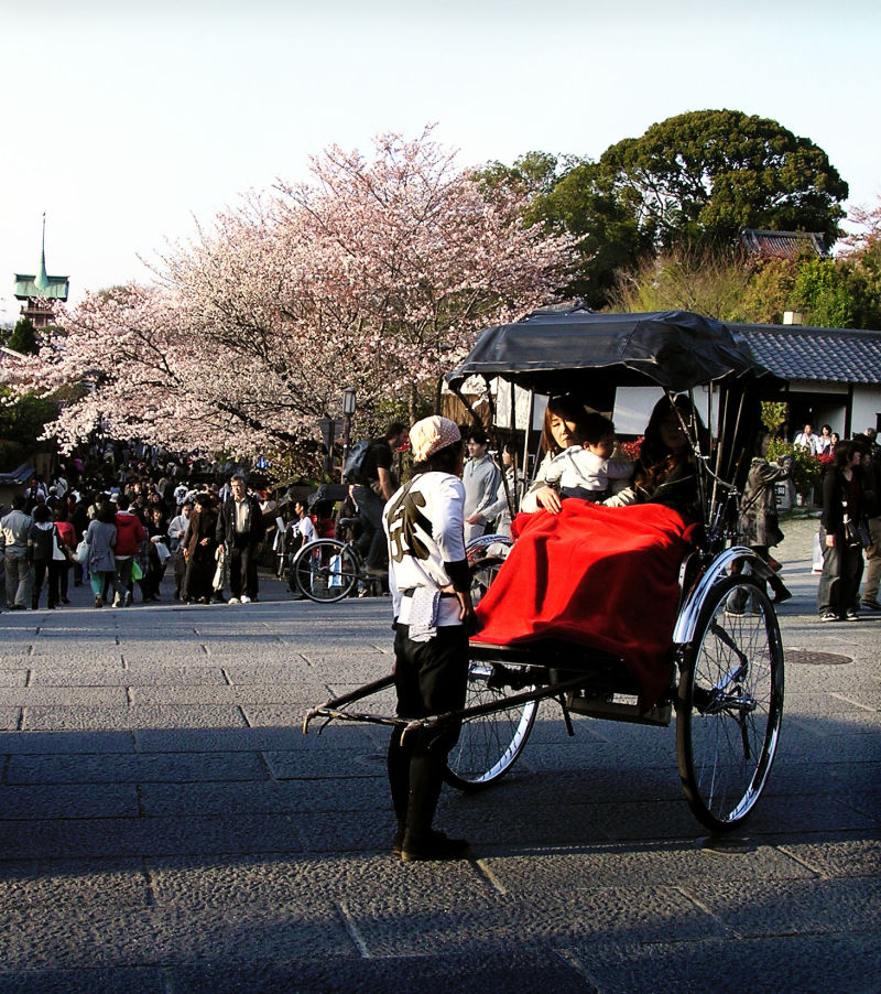 tourist Kyoto Japan sightseeing sakura
