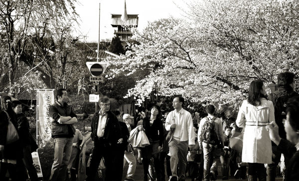 Sightseeing in Kyoto 4