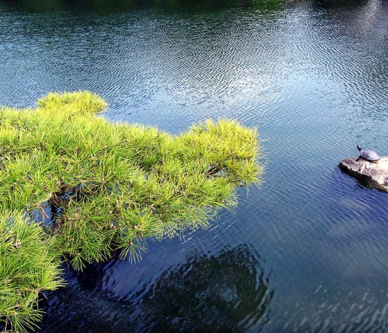 Okayama Japan Korakuen garden turtle pine lake