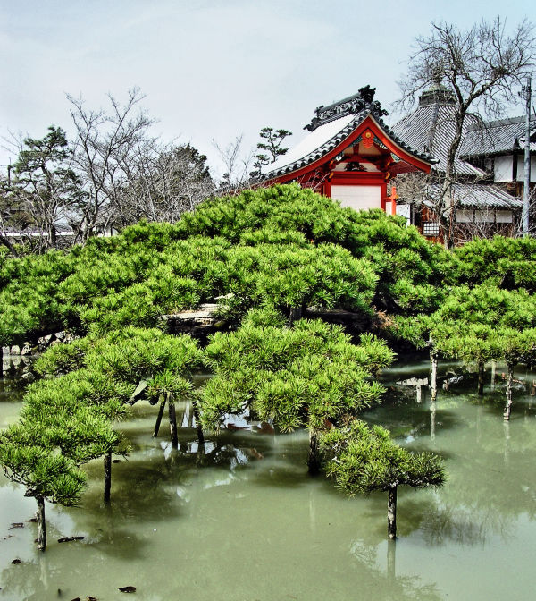 Kibitsu Shrine, Okayama Japan pond pine