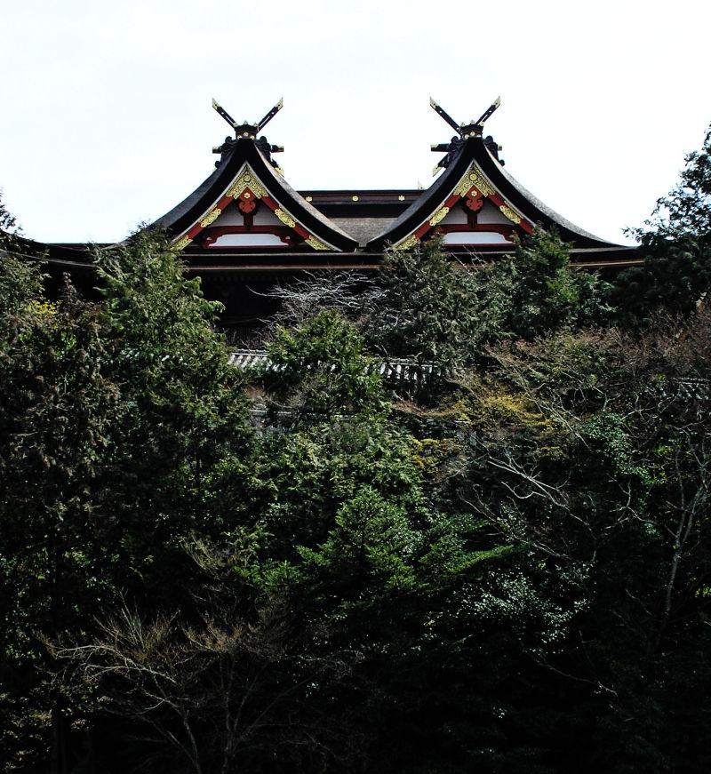 Kibitsu Shrine, Okayama Japan hall roof tree