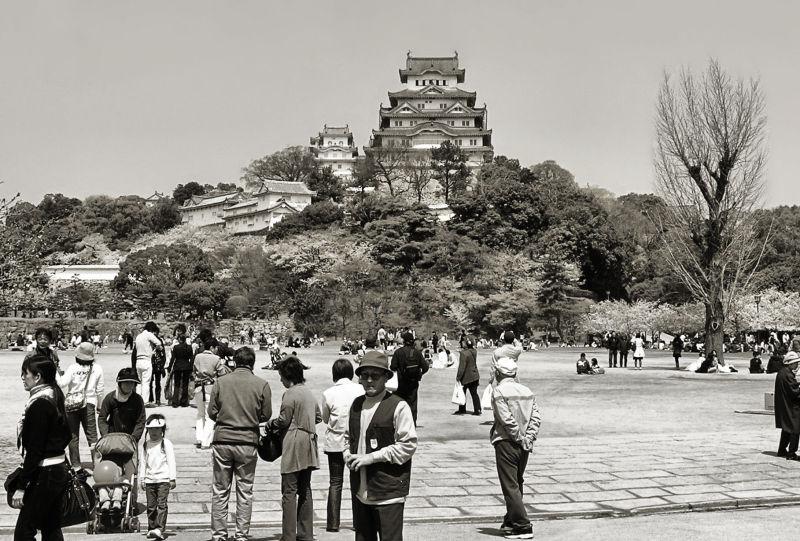 Himeji castle blossom sakura park tourist Japan