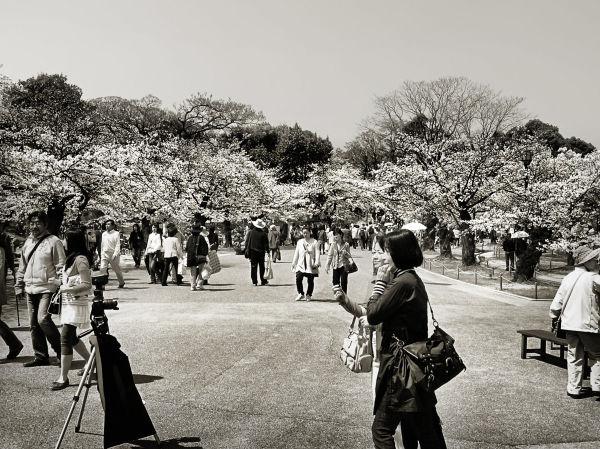 Springtime at Himeji Castle 4