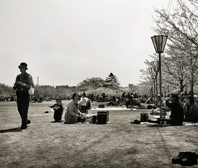 himeji castle blossom sakura park picnic japan